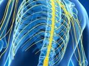 SCLÉROSE plaques: L'infection associée risque réduit, virus traitement? Journal Neurology Neurosurgery Psychiatry