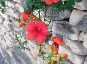 semaine mots photos instagram Provence