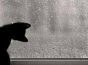 1114. Jour pluie