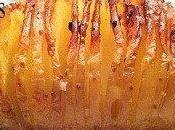 Pommes terre hérisson (Suédoises)
