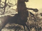 animaux imaginaires Joan Fontcuberta Londres