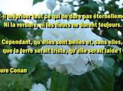Citation image Laure Conan