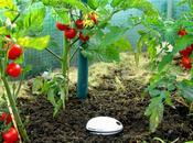 Koubachi Plant Sensor, capteur connecté pour plantes