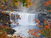 Autumn Falls 2014: voile lève quant programmation!