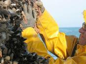 Charente-Maritime Vendée calamité agricole pour moules