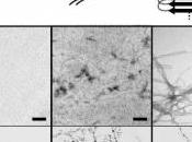 ALZHEIMER: faute protéine agrégats? Chemical Biology