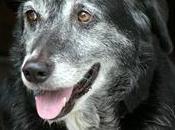 tremblements chez chien définitions liste causes