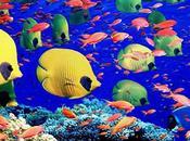 meilleurs fonds marins pour amoureux plongée