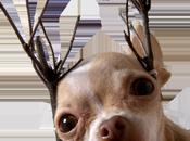 Pense-bête spécial Noël pour e-commerçants