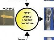 INFECTION: bactéries regroupent gangs pour mieux résister Cell Host Microbe