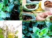 plantes médicinales parfum quête d'investisseurs (http://www.ann.dz/)