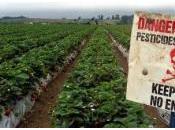 N'achetez pommes traitées chimiquement justice donne raison Biocoop