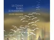 oiseaux blancs Manhattan, Xavier Armange