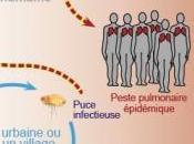 PESTE Madagascar: puces vecteurs résistantes insecticides