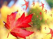 hirondelle automne