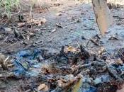 Pollution sols révélations scandale caché