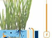 PLANT POWER Energie plantes