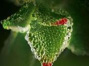 Sérum Végétal renouveau gamme anti-âge d'Yves Rocher