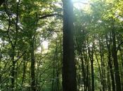 Auprès Grand-arbre Michel Deydier