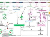 #trendsinbiochemicalsciences #ARN #protéine #génomique Exploration réseaux ARNs-Protéines quand biochimie rencontre génomique