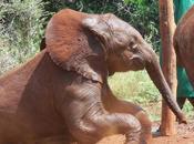 nairobi éléphanteaux