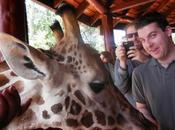 nairobi girafes