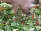 Valorisation déchets cantines scolaires ferme pédagogique Martigues