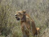 nairobi animaux