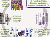 #Cell #immunité #autoimmunité #SNP #GWAS #bioressource Architecture génétique système immunitaire chez l'homme bioressource pour l'autoimmunité pathogénèse maladies