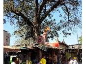 arbres Bandra