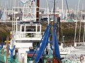 demi-mètre d'envasement pour port plaisance Rochelle,