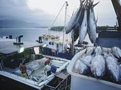 mégadonnées contre pêche illégale