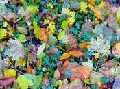 Maintenir forme automne, renforcer organisme avant l'hiver