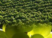 Le(s) Vin(s) peu, beaucoup, passionnément…