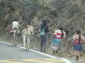 Road trip Mexique Partie Oaxaca