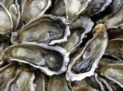 L'île d'Oléron boude huîtres industrielles
