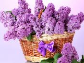 lilas sont fleurs, profitez