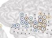 Scientifiquement prouvé, l'acouphène cérébral