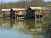 nouvelles Lodges avec hippopotames