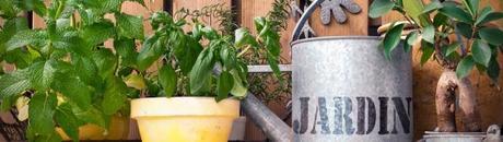 Comment s'occuper plantes pendant vacances
