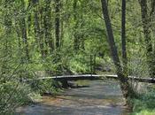 Quand nature s'éveille printemps Loiret