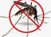 DIY: huile anti-moustiques naturelle