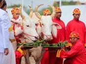 Royal Ploughing Ceremony, bonnes prédictions pour 2015 [HD]