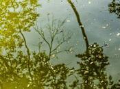 arbres dorés