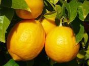 citron atouts
