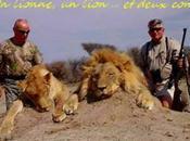 Lion suis