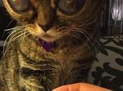 Matilda, chat yeux d'extraterrestre