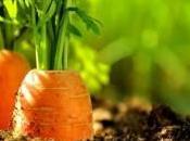 L'utilisation carotte