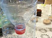 Faire pousser légumes aromates dans bouteille plastique #DIY