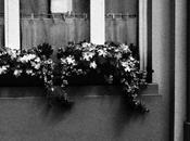 fleurs Bruxelles